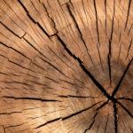Комблаг Петербурга обязали отчитываться о рубке деревьев
