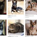 NKEA поможет животным попасть в семью