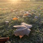 Петербуржцы делятся фотографиями первых морозов