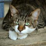 В Петербурге ищут дом для котов из «Севкабеля»